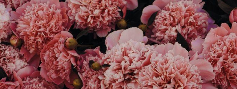 Phi Mu Carnation Sales benefitting CMNH