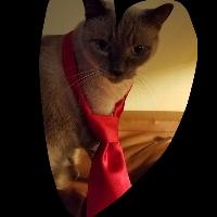 Cleo profile picture