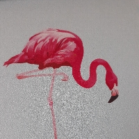 Flying Flamingos profile picture