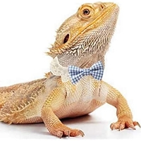 Team Bearded Dragon profile picture