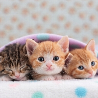 Itty Bitty Kitty Love Club profile picture