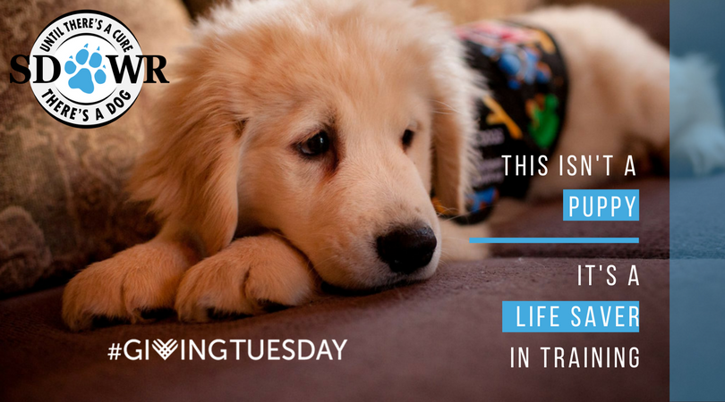 GivingTuesday Puppy Service Dog