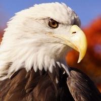 The Raptor Center (TRC) profile picture